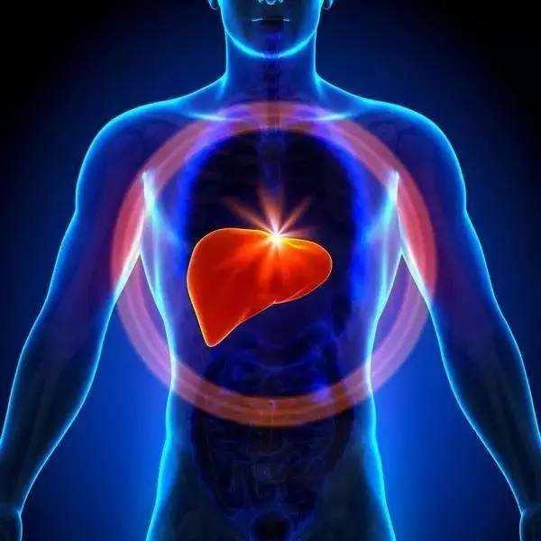 肝脏.png